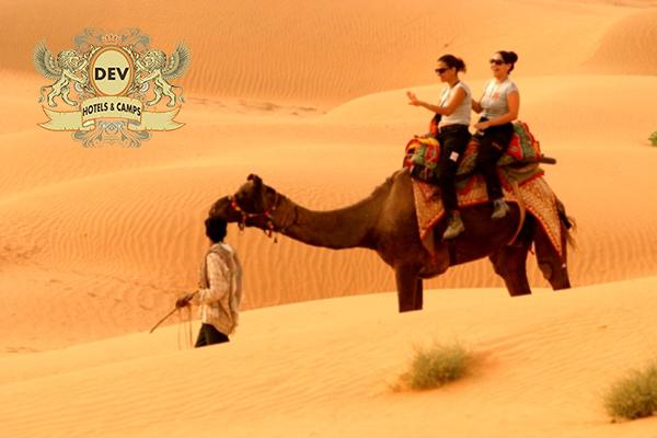 camel_safari